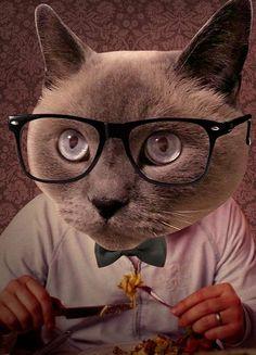 ¡CENÁ CON NOSOTROS EL SÁBADO! Te esperamos con una cena muy especial a beneficio de nuestros gatos en Almacén La Siesta. El cubierto cuesta $150 y los vales Pasala bomba comiendo y ayudando. Escribí a botanico.finanzas [@] gmail.com