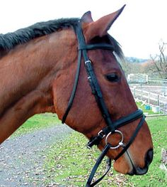 Bridle Comfort Starts At The Crown | Horse Journal