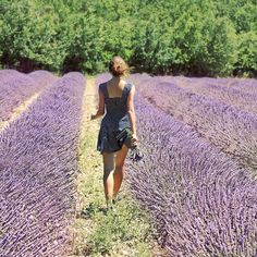 lavender dreams by sma_kee, via Flickr
