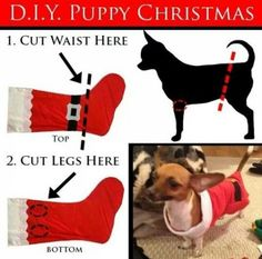 New diy dog costumes christmas ideas The Pug, Dog Christmas Clothes, Christmas Puppy, Dog Christmas Sweaters, Diy Christmas, Christmas Outfits, Christmas Stocking, Small Dog Clothes, Puppy Clothes