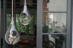 Hanging Glass Terrariums with rope