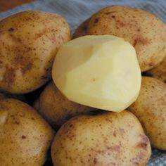 ... potatoes. This is the classic European gourmet potato. One of the best