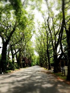 Todt Hill streets in Staten Island, NY. Find out more about Todt Hill and other NYC neighborhoods at http://relocality.com.