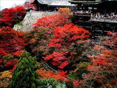 Paket Tour Jepang 2014 Biaya Murah Bersama Cheria Travel