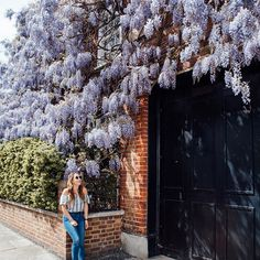 A little bit of #wisteriahysteria to get you through Monday ••• Looking forward to heading back to West London to check out the new floral displays later this week! Stay tuned 📸 @hannahrheaume
