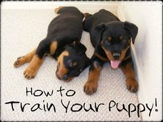 Secret Strategies for Potty Training Your Puppy