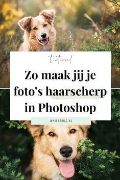 Er zijn een aantal trucjes die je in Photoshop kunt uitvoeren om je foto mooi haarscherp te maken, zonder dat het opvalt. Ik deel ze vandaag met je in deze tutorial!