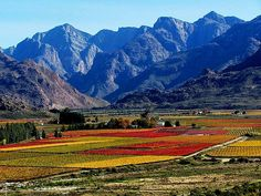 Autumn in South Africa, via Flickr. I want to feature South Africa a little bit here.
