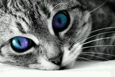Cats// Those eyes are so cool