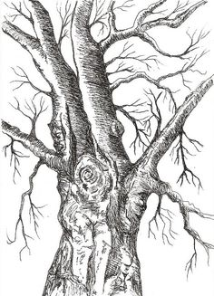 pen and ink trees | photo