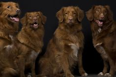 Man takes stunning personal portraits of 15 Dogs, Cat and Horses   10   - Three Million Dogs