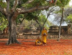 Ayutthaya was a Siamese kingdom that existed from 1351 to 1767. These Buddhist monks stand below a vibrantly flowering tree in the ancient city Ayutthaya Thailand, Photographer Pictures, Boat Painting, Mountain Village, Buddhist Monk, Great Wall Of China, World Images, Travel News, Flowering Trees