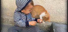 Max şi primul animal de companie Codruta Romanta Corgi, Blog, Children, Young Children, Corgis, Boys, Kids, Blogging, Child
