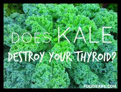 Does Kale Destroy Your Thyroid….Find out the truth about this popular misconception.