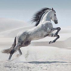 Magic Horses (171537)