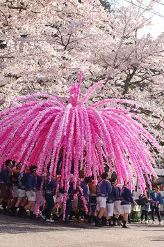Hana-Mikoshi under a tree of cherry blossom Aichi Japan    The flowers of Hana- Mikoshi made by Japanese paper(Washi).  Washi was dyed with Sakura color. via flickr