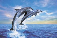 dolphines - Google Search