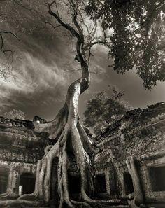 Ancient tree, Angkor Wat (photo by Beth Moon) Beautiful Dark Twisted Fantasy, Dark And Twisted, Twisted Tree, Angkor Temple, Buddhist Temple, Angkor Wat, Temple Ruins, Les Continents, Tree Woman
