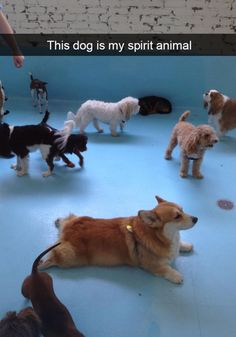Hilarious Snapchats With Dogs In The Leading Role #funny #picture