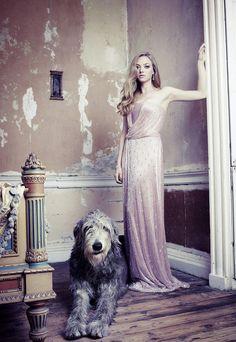 Irish Wolfhound Dogs and fashion...perfect photo