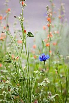 Полевые цветы. Для вдохновения.
