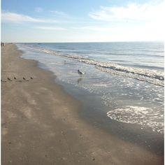 Gulf side wild life