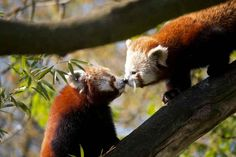 """""""The sunlight claps the earth, and the moonbeams kiss the sea: what are all these kissings worth, if thou kiss not me?"""" - Percy Bysshe Shelley 