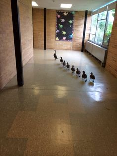 "catsbeaversandducks:""… and now we are going to have a ""Meet & Greet"" so you can see your classroom and find out some of the things we are going to be learning this year. Come with me, kids!"" Photo via awwww-cute"