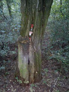 Vodka Tree!