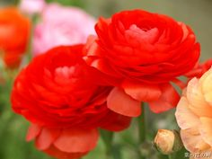 Red Roses ❀ inspiration 4 Spring Summer 2012 Fashion