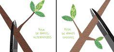 Jardim da Terra: COMO CULTIVAR: Como podar rosas