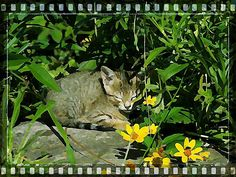 #Nature  #art  #kitten  #garden  #summer
