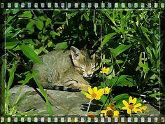 #Nature  #art  #kitten  #garden  #summer