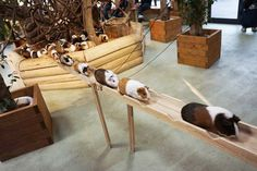 Guinea Pig Bridge...so cute!! http://www.boredpanda.com/guinea-pig-commute-nagasaki-bio-park/?afterlogin=savevote&post=125966&score=1