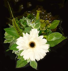 single gerbera flower arrangement