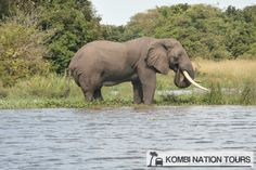 An elephant on the banks of the Nile! For more information on Uganda's National Parks and Reserves, please visit our website.