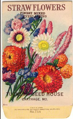 Tucker's Seed House - Straw Flowers