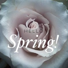 We are so glad to have you Spring! Stay awhile  #firstdayofspring #hellospring by haudreyboutique