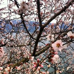 basta un secondo e ti pare già #primavera [#foto Matteo Bettinsoli] #LagoDiGarda #VisitLagoDiGarda #PrimaveraLagoDiGarda #PrimaveraSulGarda