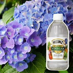 hydrangea garden care 10 Secret Ingredients That Can Help Your Garden Grow Garden Care, Flowers Garden, Planting Flowers, Flower Gardening, Succulent Gardening, Flowers Perennials, Potted Flowers, Outdoor Flowers, Purple Perrenial Flowers