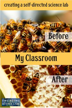 Blog chronicling my journey to a self-directed, middle school science classroom and watching it transform from chaos to commotion-free.