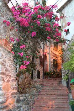 Bouganville di Ameglia, Liguria Italy
