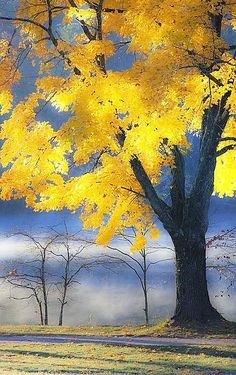 ~ Autumn Maple, Canada ~