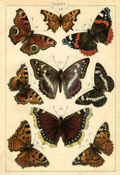 Butterflies for artwork