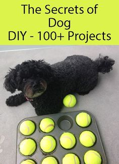 Dog DIY Game. Make this game for your dog or check out one of our other DIY Dog Projects. #DIYDogProjects #DogGame