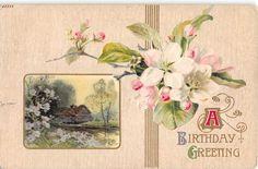 Apple Blossoms Near Rural Scene in Spring 1910 Birthday Postcard | eBay