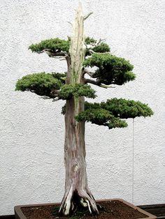 National Bonsai & Penjing Museum at the United States National Arboretum