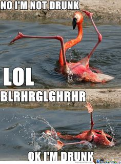Haha this is one of the best drunk animal memes that I've seen. Lmfao omg after our convo rite now im picturing u like this! Funny Shit, Funny Cute, Haha Funny, Funny Drunk, Funny Stuff, 9gag Funny, Drunk Memes, Silly Jokes, Drunk Quotes