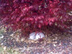 my cat sleeping under the burning bush