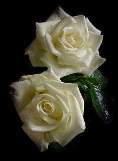 roses Автор Н. Якимчук.